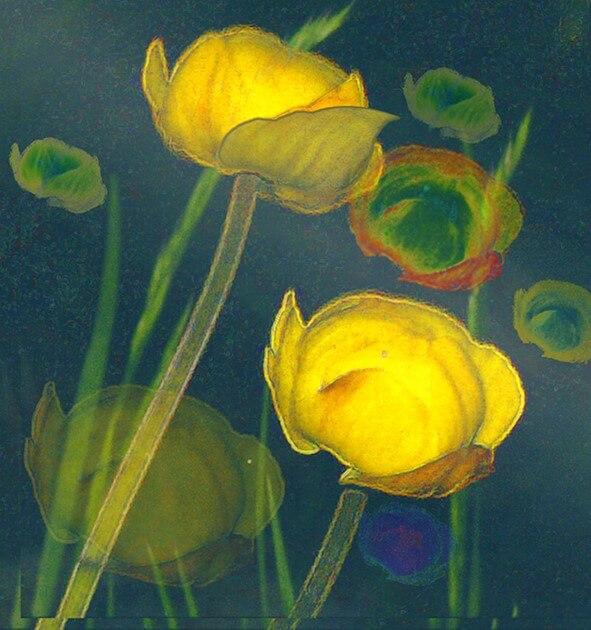 Gelbe Blüten auf grauem Grund